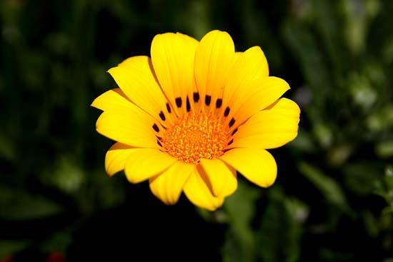 春の花3.JPG