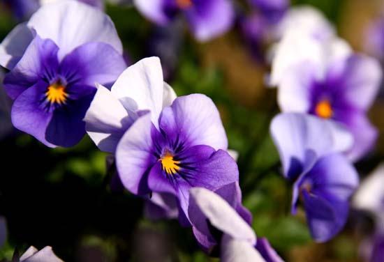 春の花6.JPG