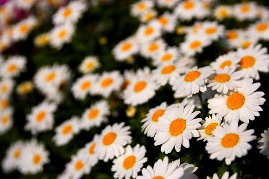 春の花7.JPG
