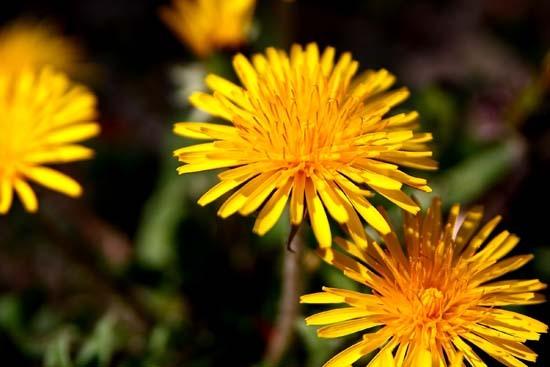 春の花8.JPG
