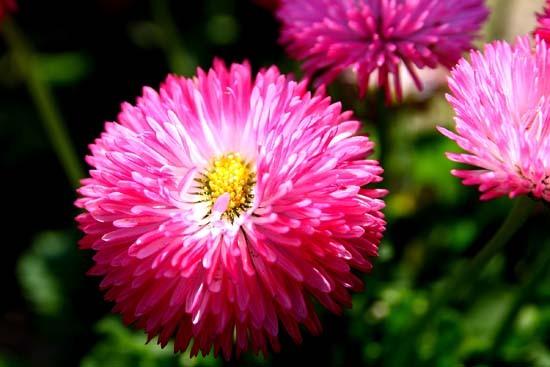 春の花9.JPG