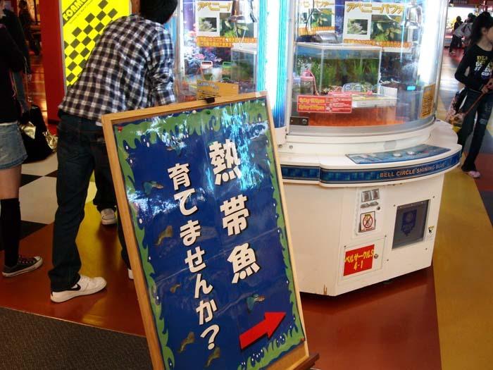 熱帯魚キャッチャー.jpg